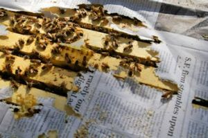 The Bees Have Chewed Their Way Through the Newspaper