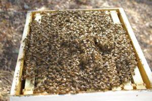 Doomed Hive
