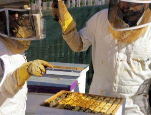 BeeExperienceGuestInstruction
